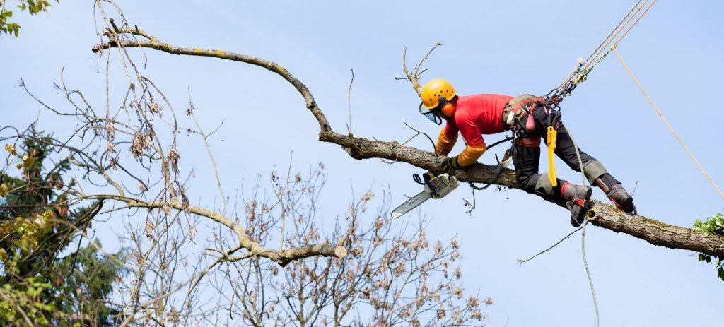 Trädfällning Arboga