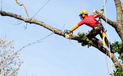Trädfällning Eskilstuna